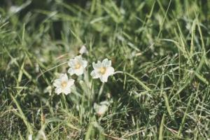 Primroses on the cliff side - they are a flower that blooms during my birthday month and much remembered from my childhood