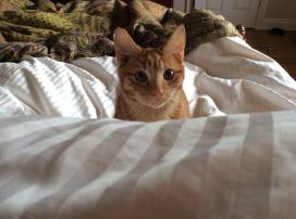Rorycat