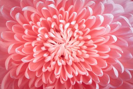 41900135 - flower