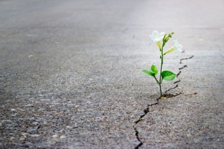 41537383 - white flower growing on crack street, soft focus, blank text